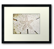 Dirty sanddollar Framed Print