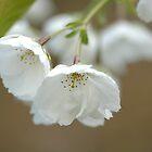 Spring in Washington State-8 by Jeff Burgess