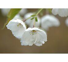 Spring in Washington State-8 Photographic Print