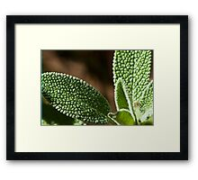 sage leaves  Framed Print