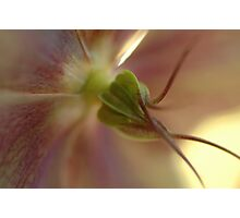 Spring in Washington State-10 Photographic Print