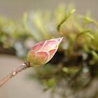 Spring in Washington State-13 by Jeff Burgess