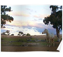 In the horse paddock! Poster