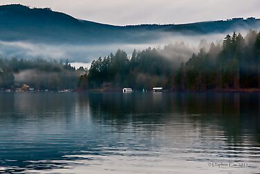 Mist On Shawnigan Lake BC Canada by Daphne Eze