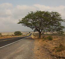 Tree by Eric  Williamson