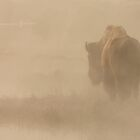 In the Mist by Nate Zeman