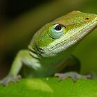 green anole by FLLETCHER