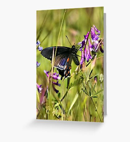Butterfly & Wildflowers Greeting Card