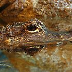 chinese alligator by FLLETCHER
