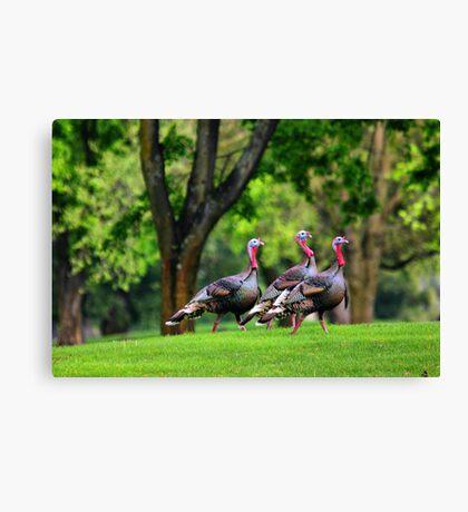 Golf Course Turkeys Canvas Print