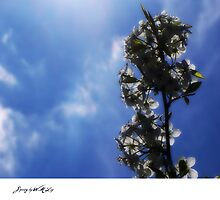 spring (blue skies and glowing light) by xplor-r
