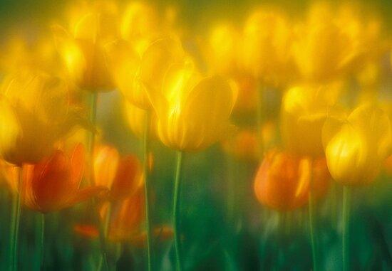 Sun Garden by sundawg7