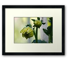 Coloured bud Framed Print