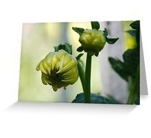 Coloured bud Greeting Card