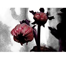 Coloured Bud series, magenta version Photographic Print