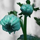 Coloured bud series, cyan version by Alayna de Graaf Photography
