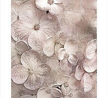 Hydrangea Blushing Bride by Carmen Holly