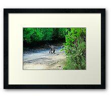 Wildcat again Framed Print