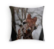 Rothschild Giraffe Throw Pillow