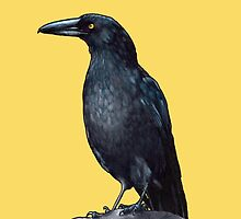 Currawong 2 by ria gilham