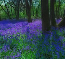 Bluebells Again by jakeof