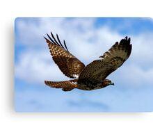 Redtail Hawk Flight Canvas Print