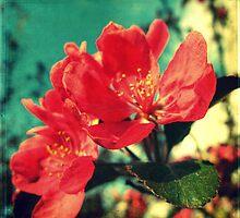 Retro Blossom by Kitsmumma