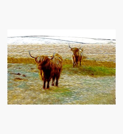 Hairy Beasties Photographic Print