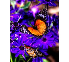 Colourfull Wings Photographic Print