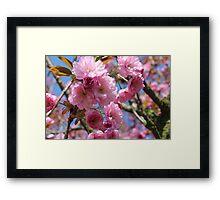 Japanese Cherry Tree Blossoms - Heralds of Spring Framed Print