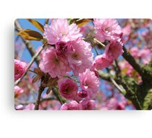 Japanese Cherry Tree Blossoms - Heralds of Spring Canvas Print