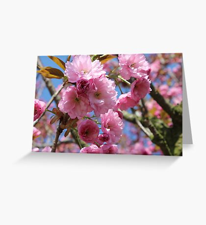 Japanese Cherry Tree Blossoms - Heralds of Spring Greeting Card