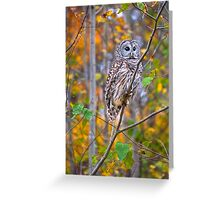 Juvenile Barred Owl in Autumn Forest Greeting Card