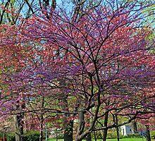 Spring Pastels by Margan  Zajdowicz