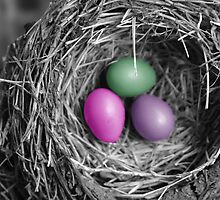Colored Eggs for Easter! by PhOtOgaljan