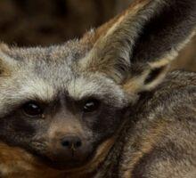 Bat Eared Fox Sticker