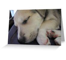 sleeping izzie Greeting Card