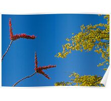 Ocotillo and Palo Verde Blooms Waving in the Wind Poster