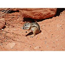 An antelope ground squirrel, Valley of Fire, Las Vegas Photographic Print