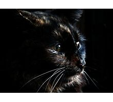 Kitty Kitty Photographic Print