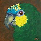 Orange Winged Amazon Parrot by Joann Barrack