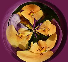 Pansy in the globe by Robert Gipson