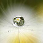 Dandelion glow by Lyn Evans