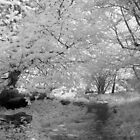 Woodland Path - Infrared by Ann Garrett
