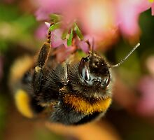 Bumble Bee by Russell Couch