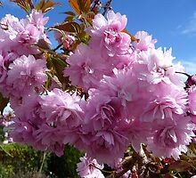 Pink Blossom Profusion by Braedene