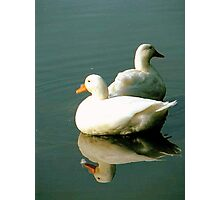 Only two ducks Photographic Print