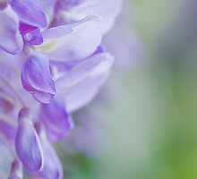 The perfume of spring by Maria Ismanah Schulze-Vorberg