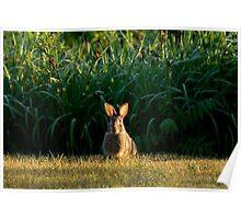 Easter Ears Poster