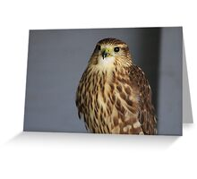 Merlin Falcon Greeting Card